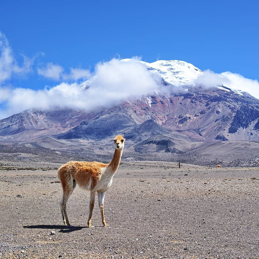 Ecuador – Volcan Chimborazo